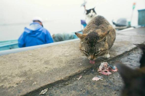 cat-heaven-island